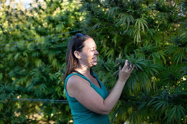 Cassie Cooper, our Assistant Farm Manager, taking in the morphology and aroma of one of our new crosses (Canna Tsu x Bubba Kush) 🌳  East Fork Cultivars | 📷: @olivia_ashtonn | #getthellama #breeding #cbd #craftcannabis #cbdcertified #sungrown #harvest #oregon