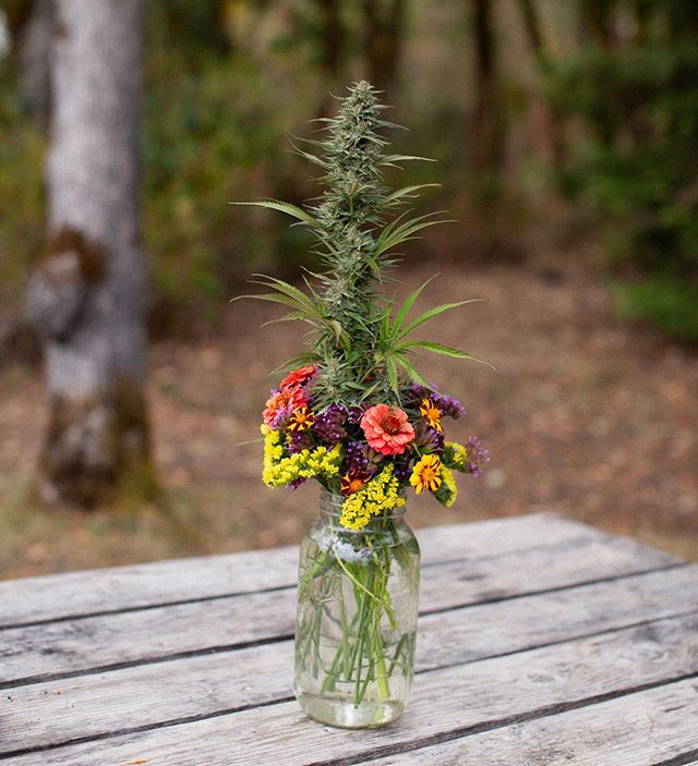 Cannabis bouquets will be back this summer (made from our @USDAgov Organic craft hemp) 💐 Who'd like one?  East Fork Cultivars | 📷: @olivia_ashtonn | #getthellama #bouquet #flowers #cbd #craftcannabis #crafthemp #usdaorganic #cbdcertified #sungrown #harvest #oregon