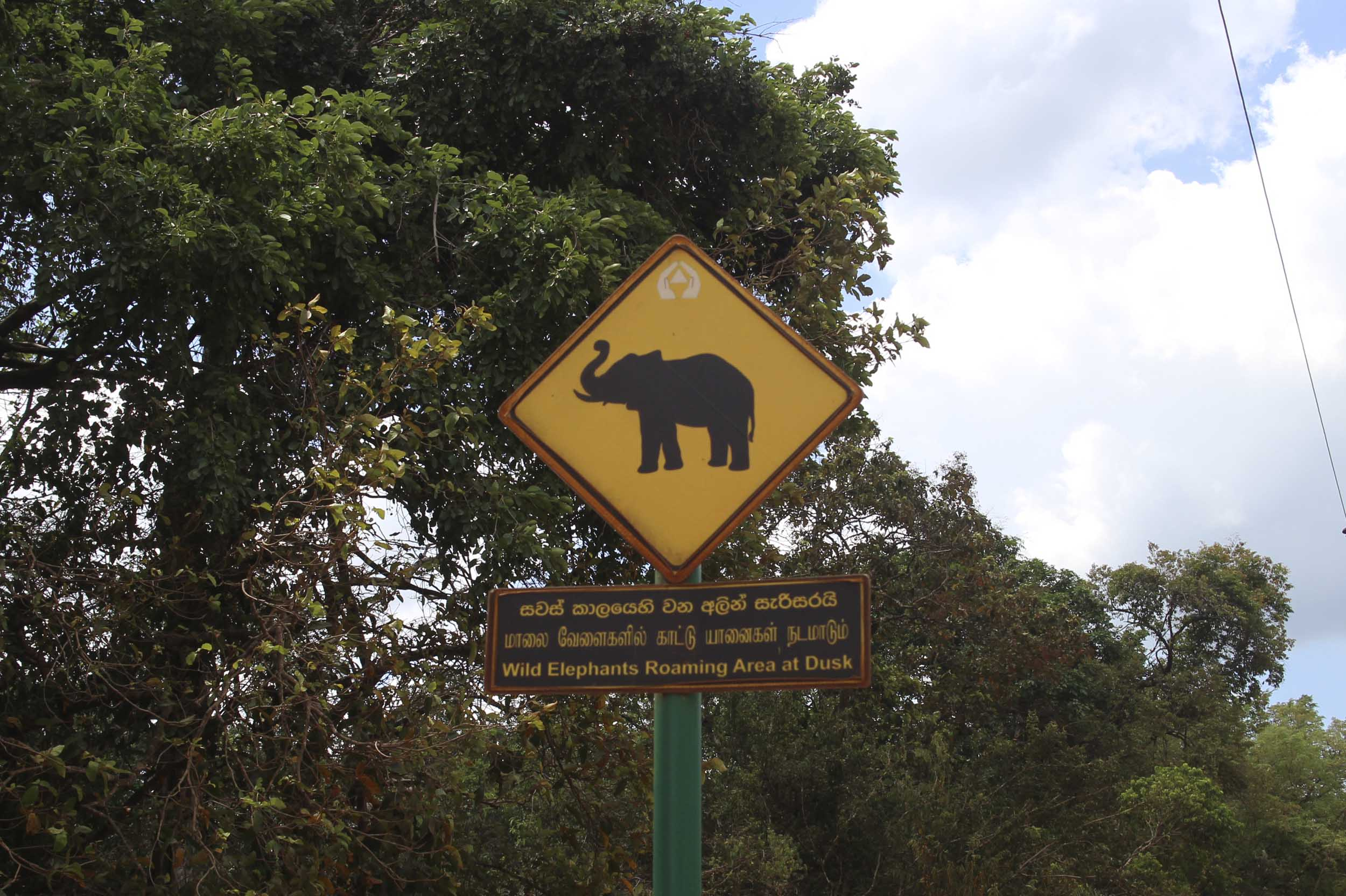I figured if there were signs saying they were 'Wild Elephants' around, they must be around somewhere?