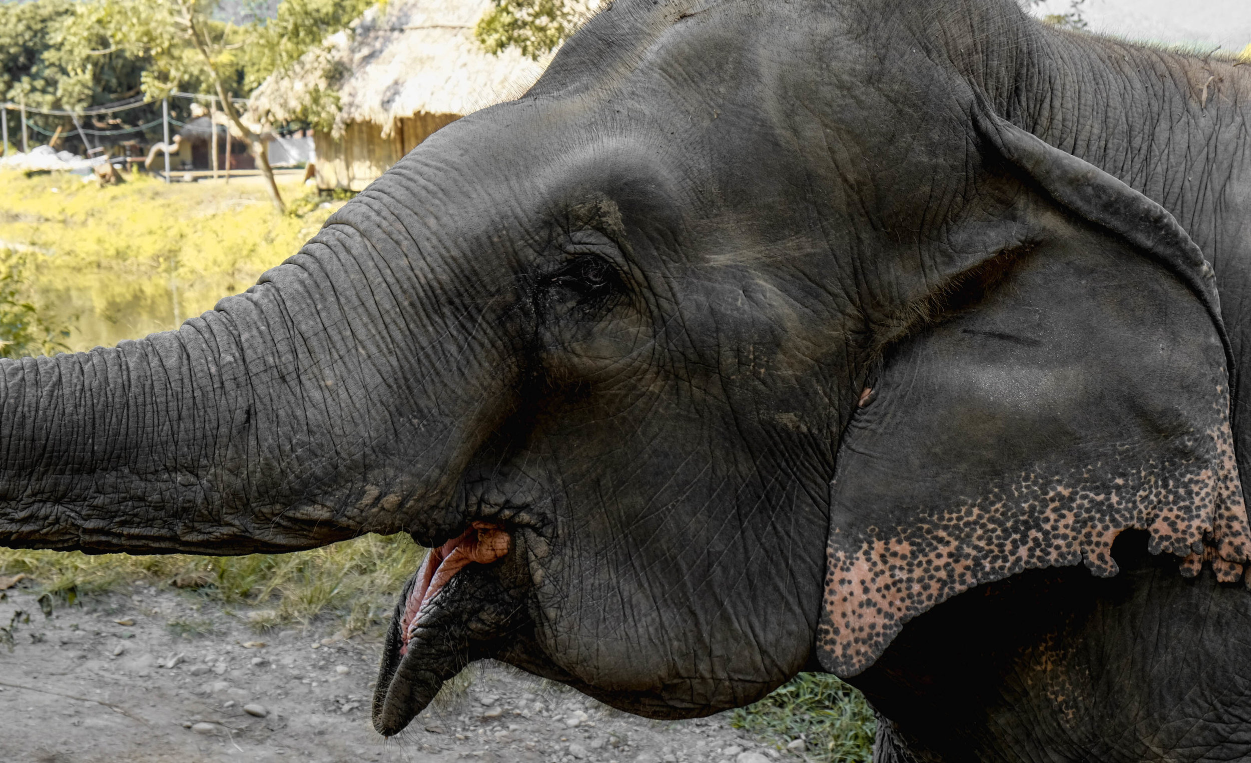 Elephant Mouth.jpg