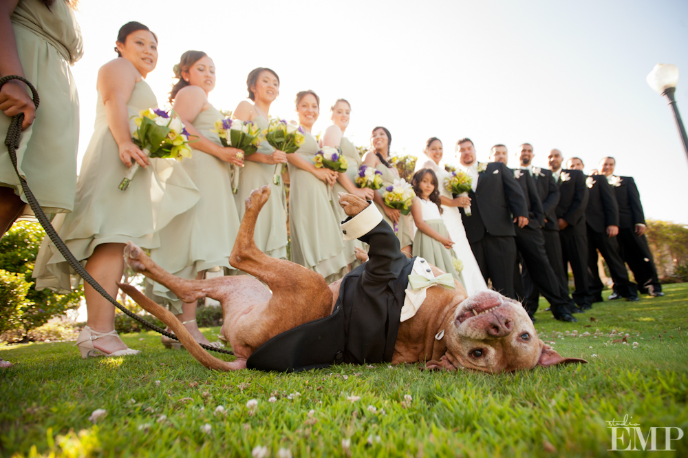 BRIDAL PARTY DOG.jpg