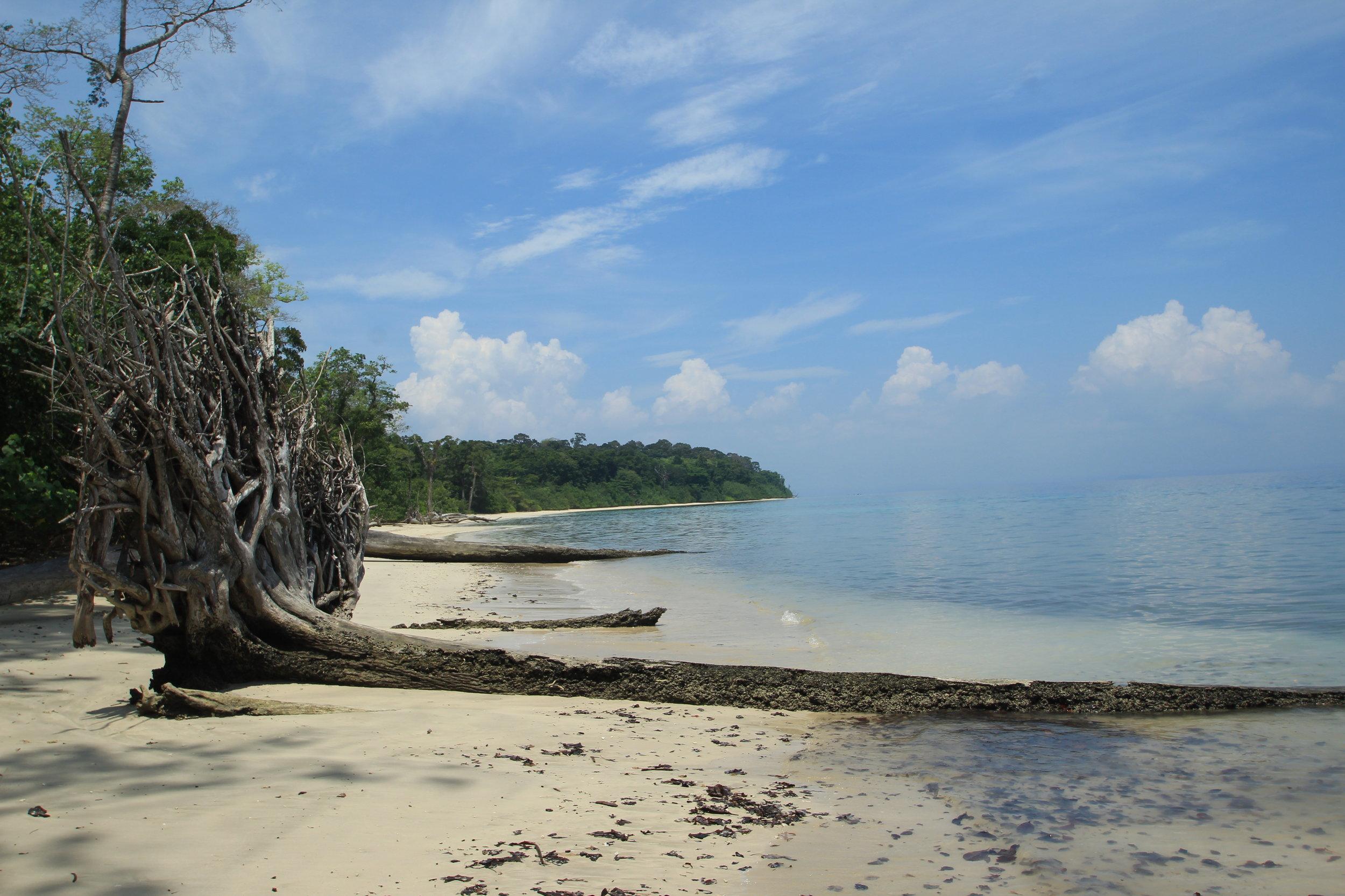 Fallen shoreline trees