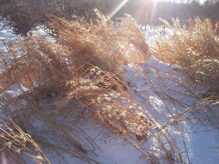 I love winter walks at the Brooklyn Botanic Garden.