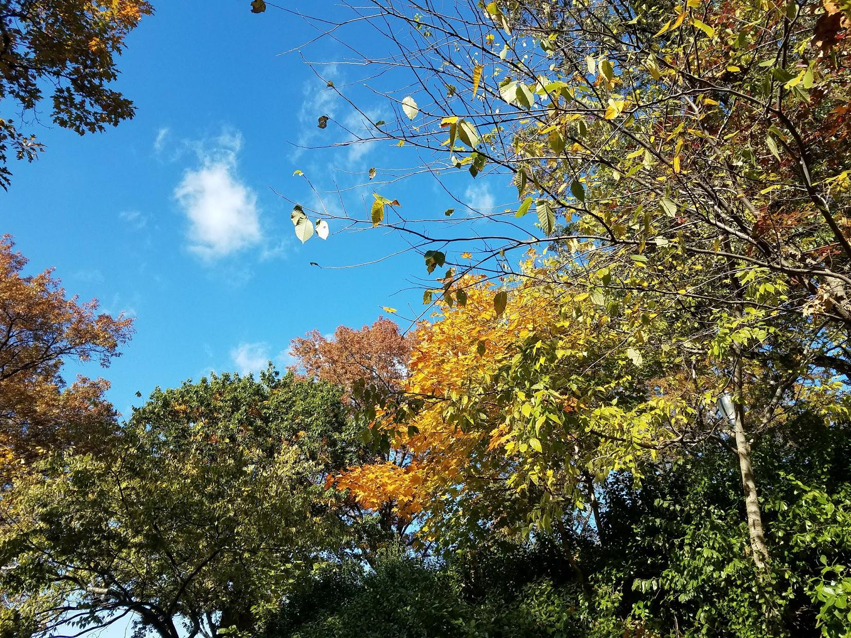 fallfoliagebrooklyn.jpg
