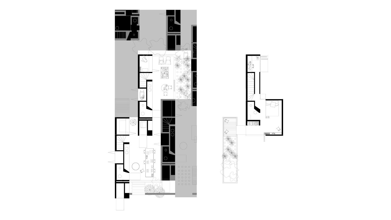 domestic compactus6.jpg