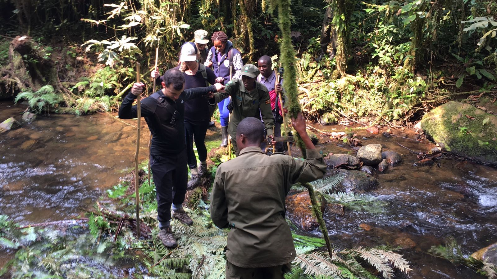 The Ultimate Guide To Mountain Gorilla Tracking In Uganda 10.jpeg
