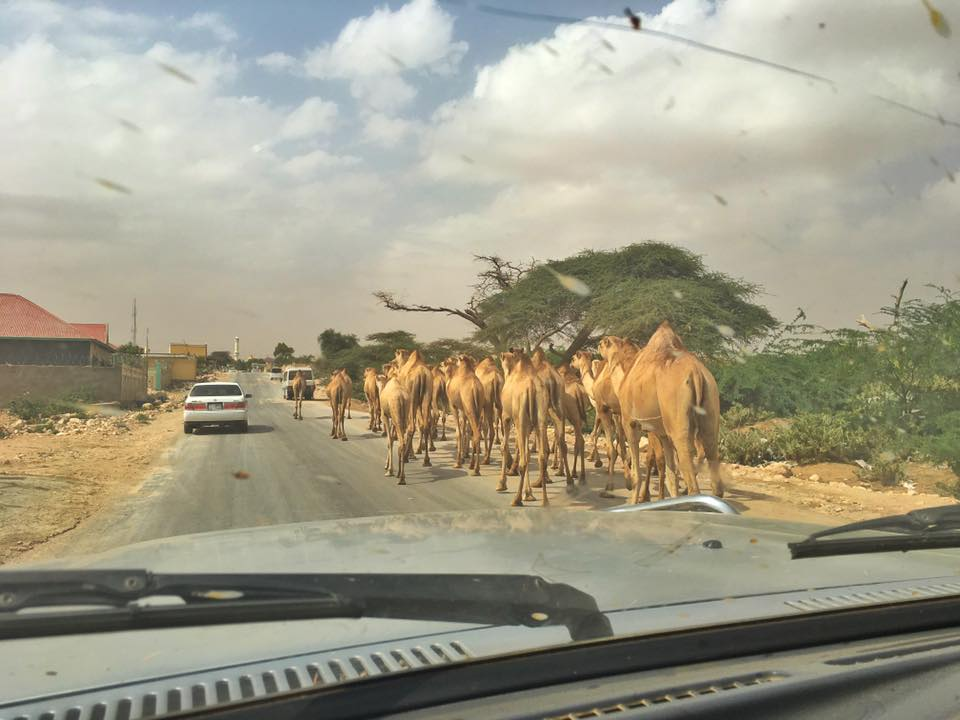 The Border To Somaliland The Danger, The Process And Useful Tips 13.jpg