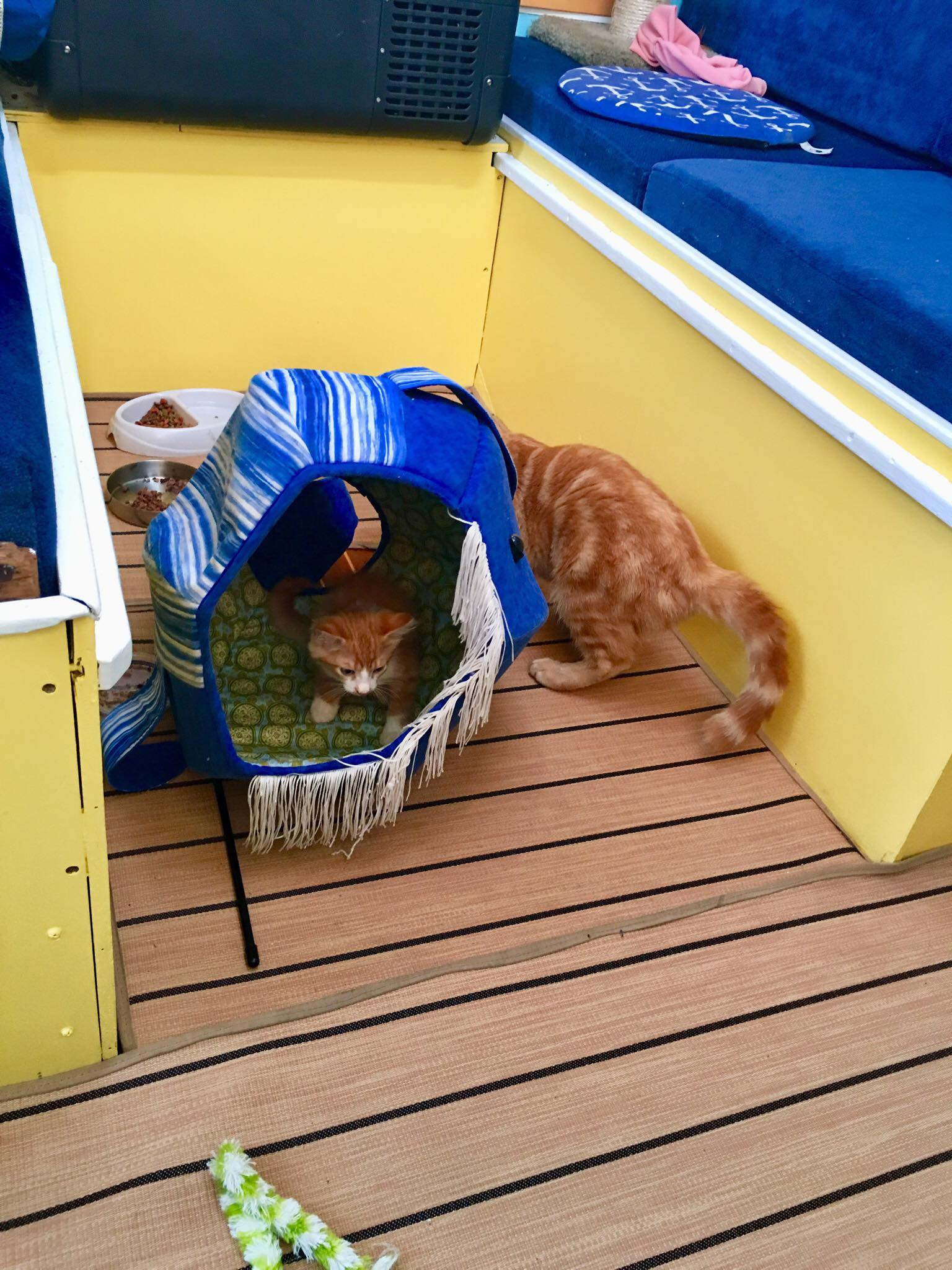 Sailing Life Day 64: Sunday Fun Day with Two Cats Sailing here in Luperon, Dominican Republic🤣😍