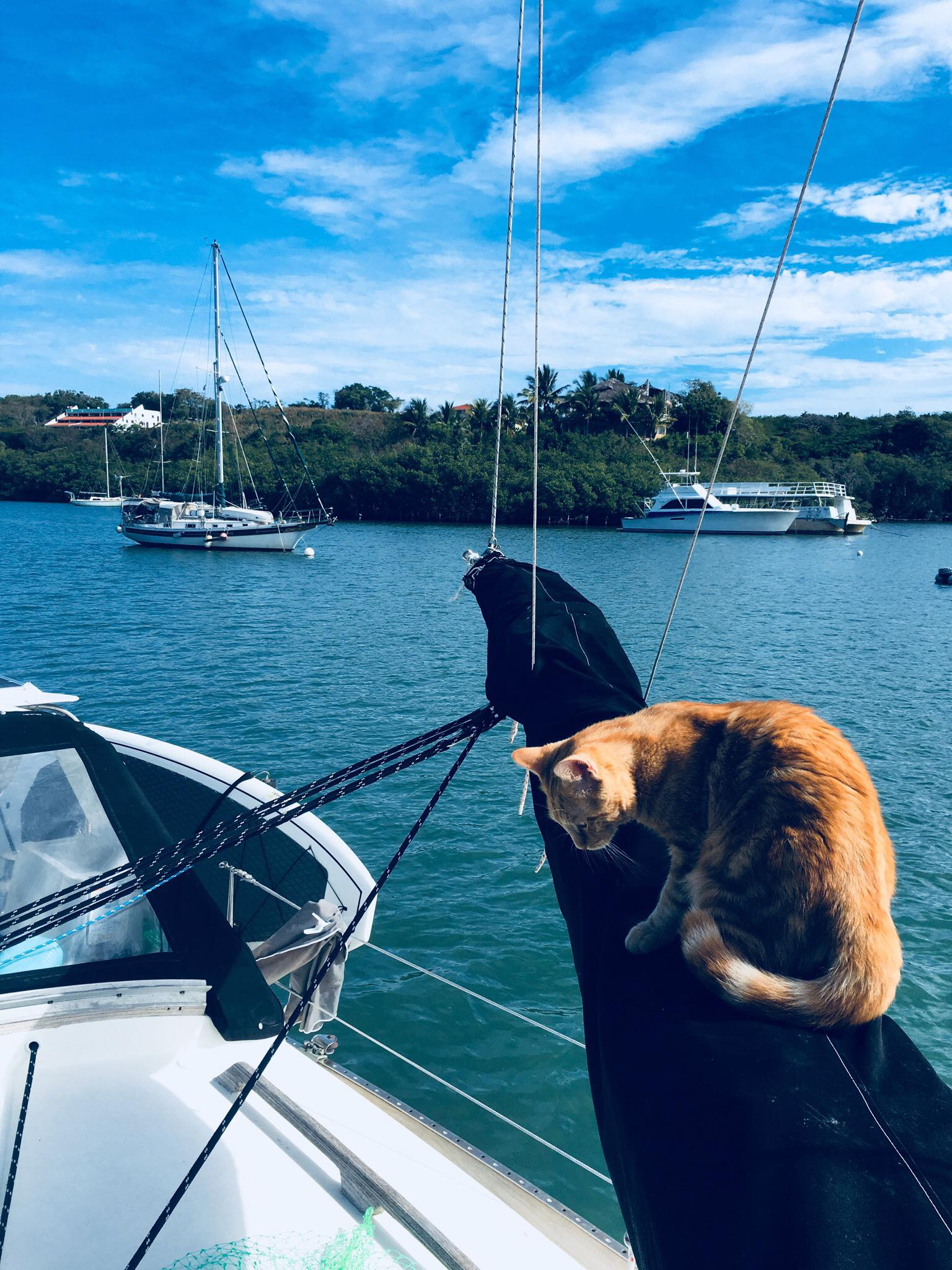 Liveaboard Life Day 93 - 95: Back to Housewife / Cat Mommy Duties + Non-Stop Online Work Schedule