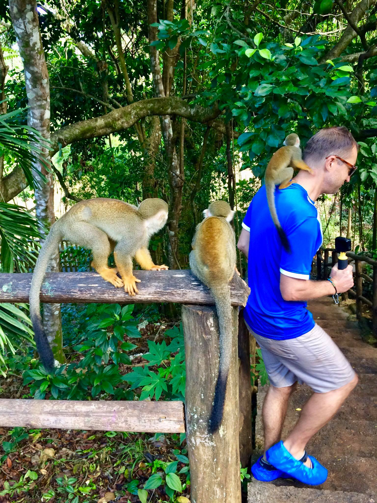Liveaboard Life Day 257: Day Trip to Cabarete + Monkey Jungle Adventures 🐒