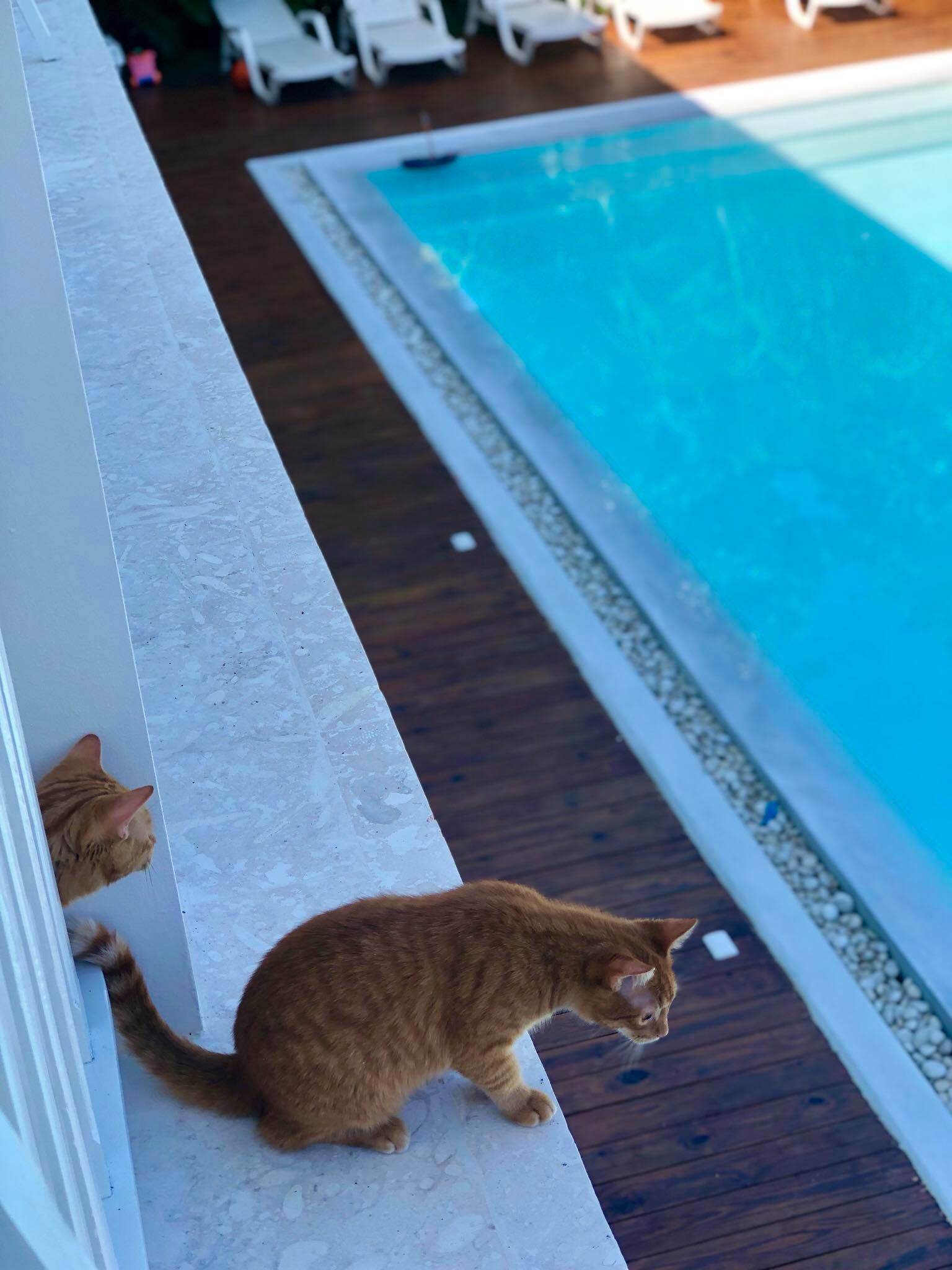 """Liveaboard Life Day 276: Our first """"holiday"""" (from our sailing life) with Captain Ahab & Zissou 😍"""