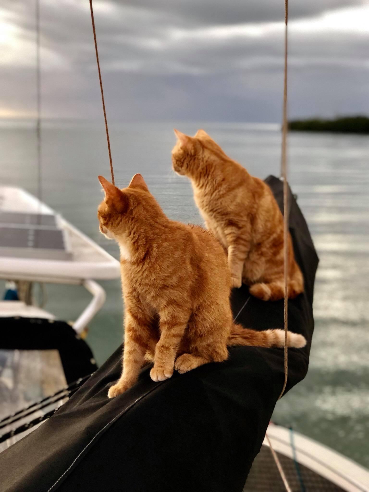 Sailing Life Day 309 Sailing (actually motoring) from Puerto Real to Boqueron, Puerto Rico5.jpg
