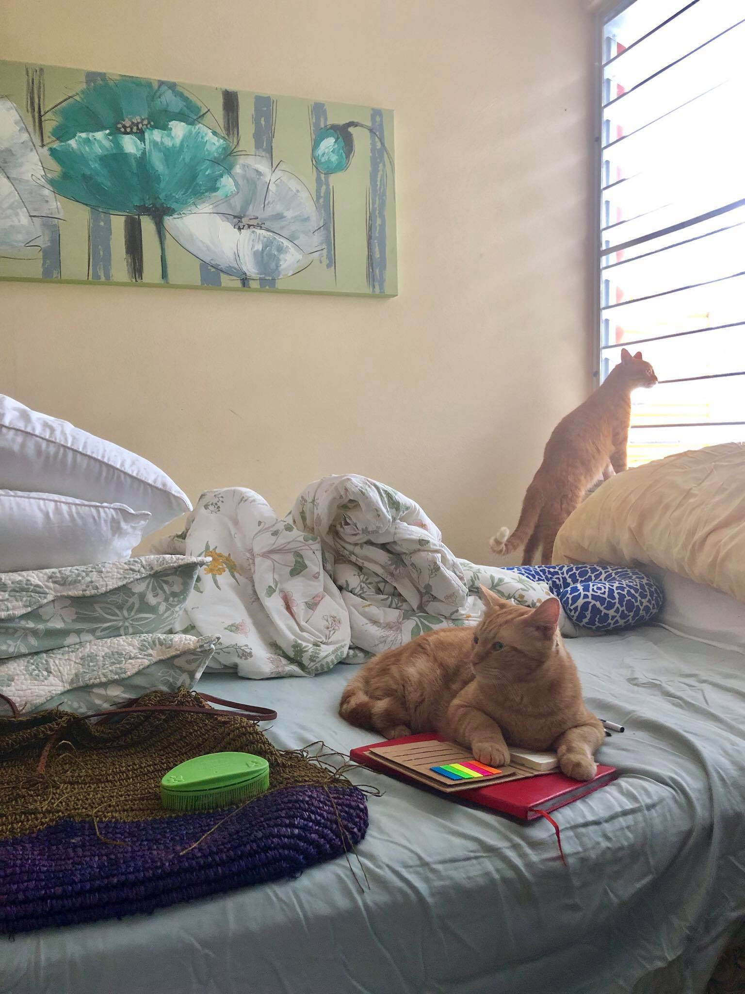 Sailing Life Day 378 Back with my husband and two cats here in Puerto Rico.jpg