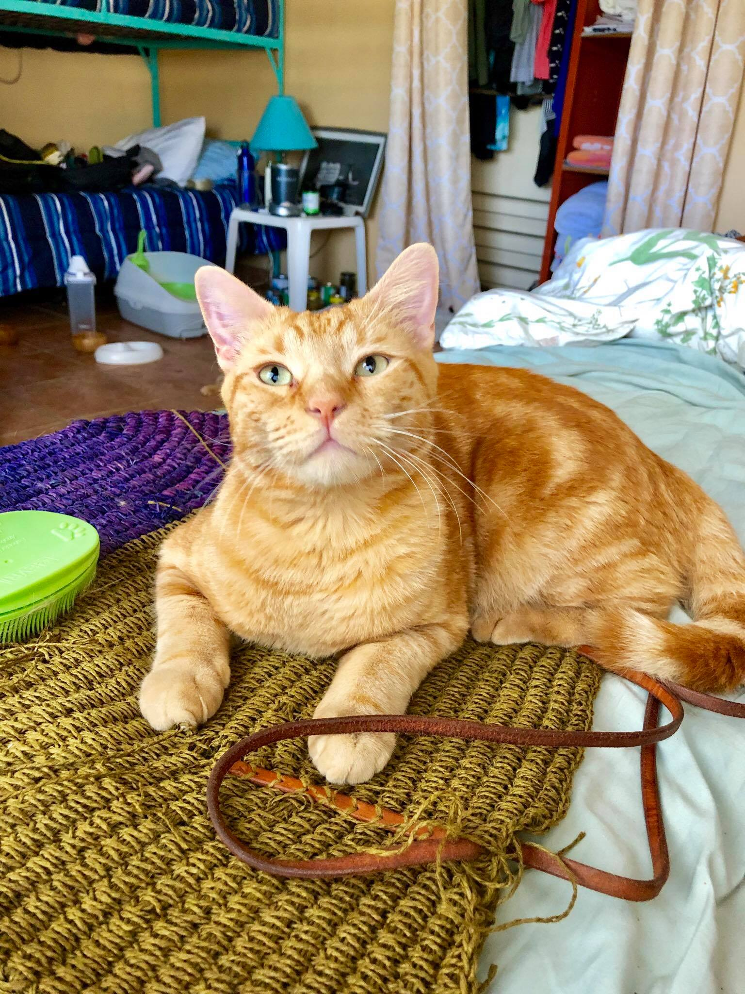 Sailing Life Day 389 I'm back in Puerto Rico with my husband and our kitty cats - Captain Ahab & Little Zissou7.jpg