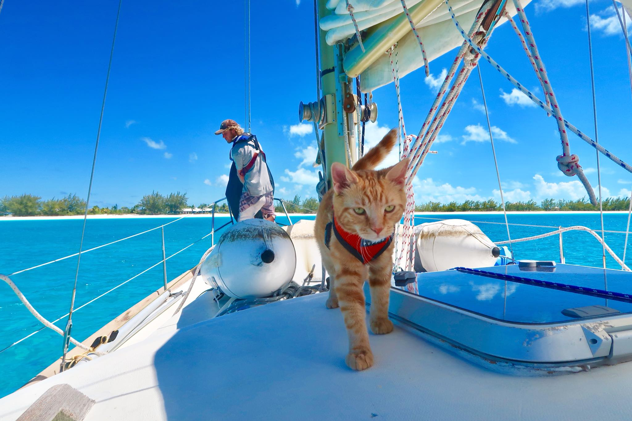 HOW TO TRAVEL TO THE BAHAMAS WITH YOUR CAT2.jpg