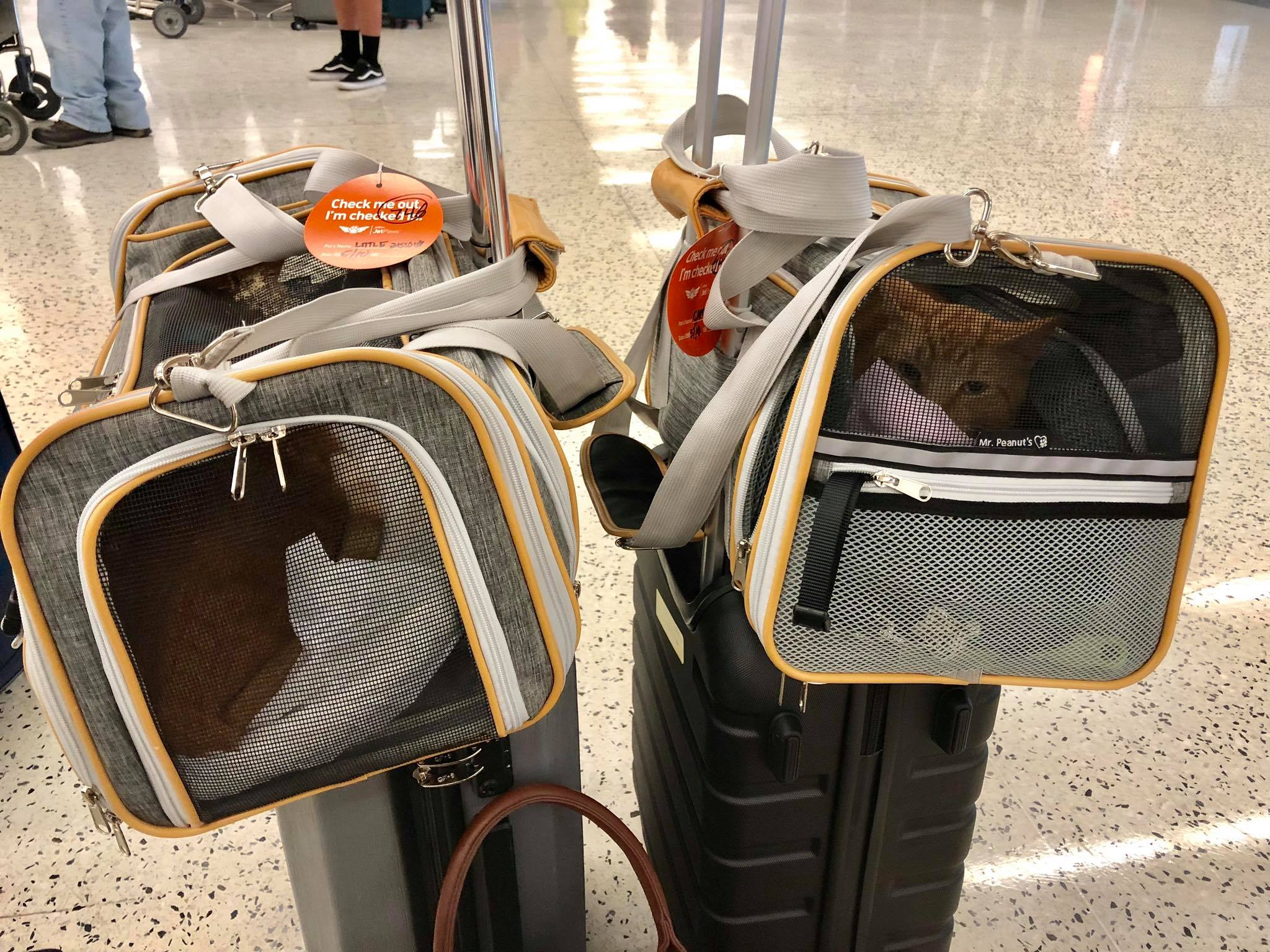 Traveling with Cats on an Airplane Cabin - Useful Tips for Safe & Relaxing  Air Travel Experience with your Pets1.jpg