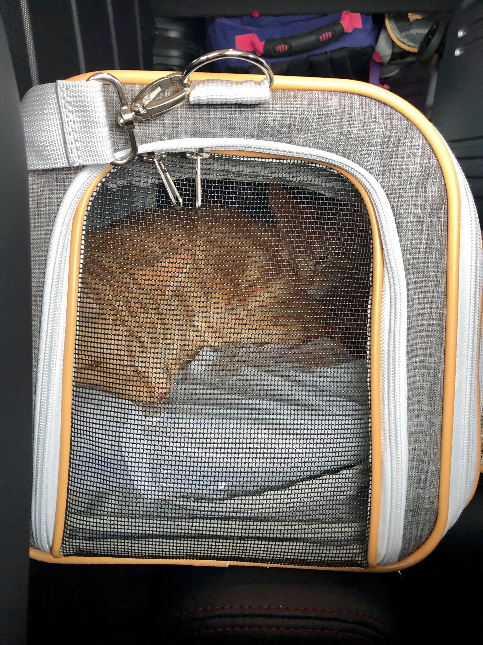 Traveling with Cats on an Airplane Cabin - Useful Tips for Safe & Relaxing  Air Travel Experience with your Pets3.jpg