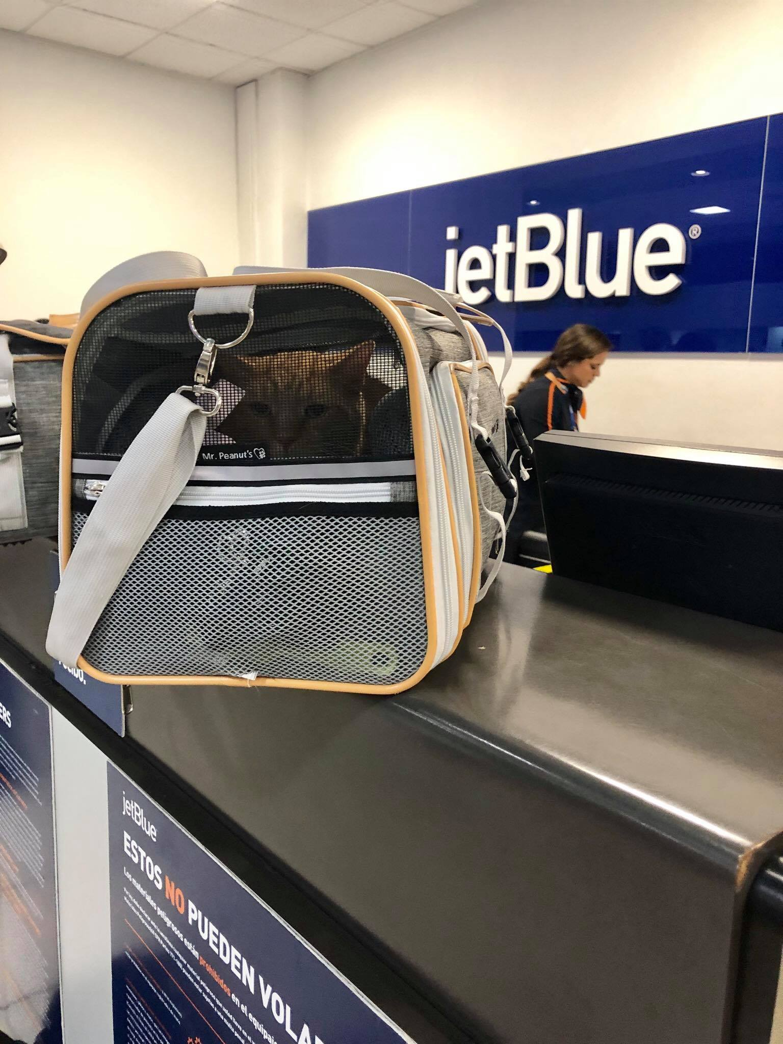 Traveling with Cats on an Airplane Cabin - Useful Tips for Safe & Relaxing  Air Travel Experience with your Pets2.jpg