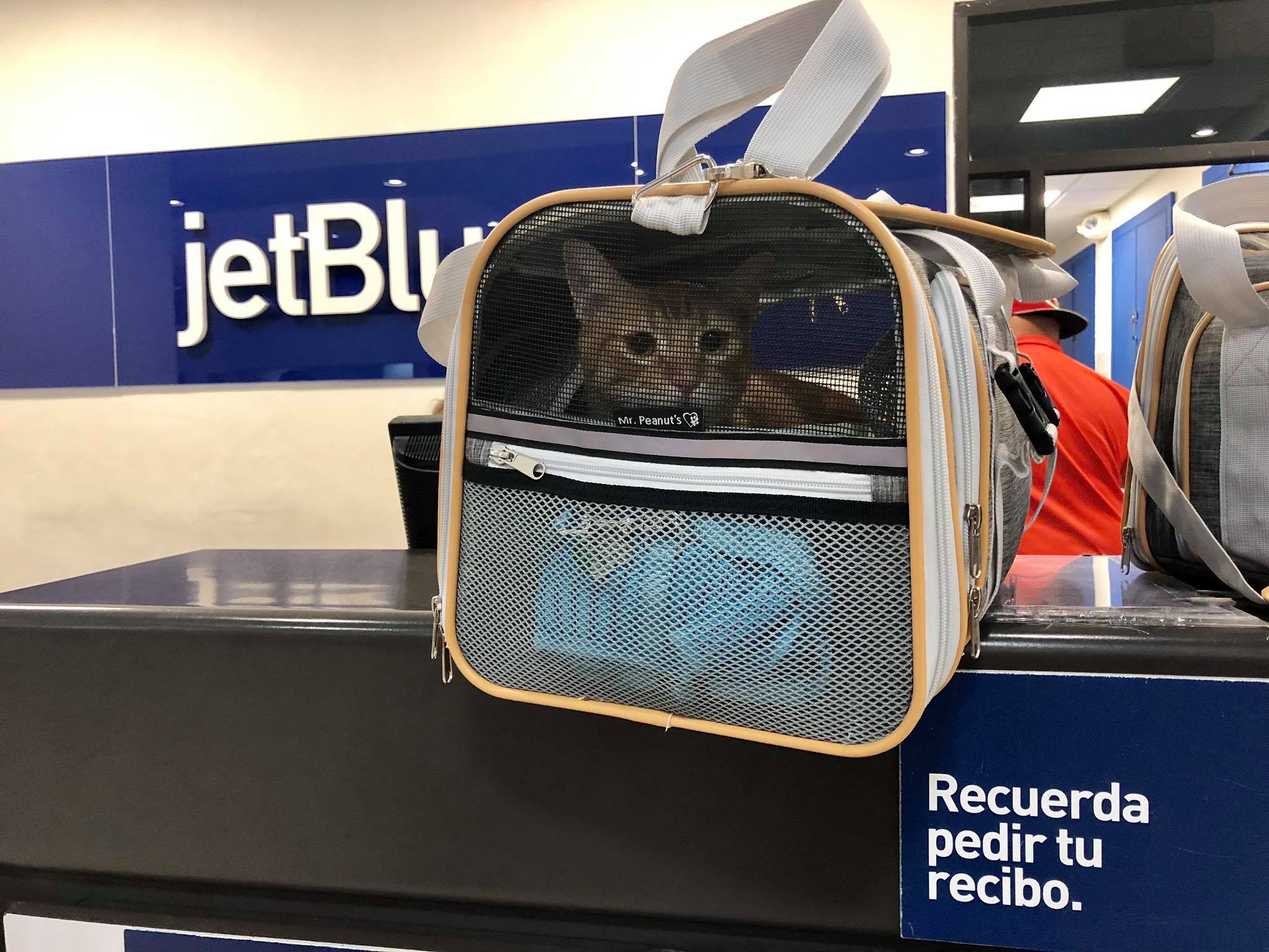 Traveling with Cats on an Airplane Cabin - Useful Tips for Safe & Relaxing  Air Travel Experience with your Pets4.jpg