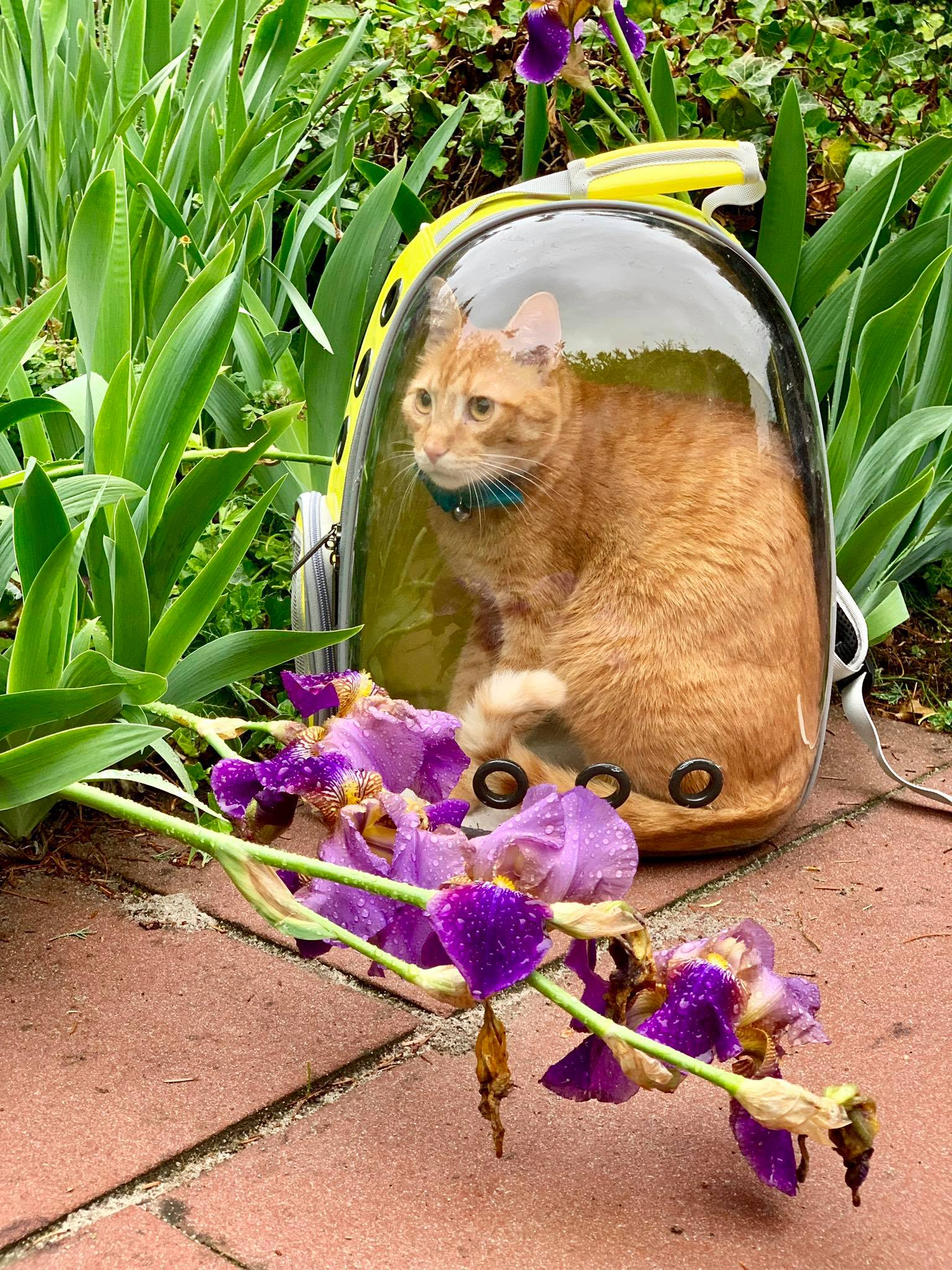 Lollimeow - awesome bag to explore with your cats1.jpg