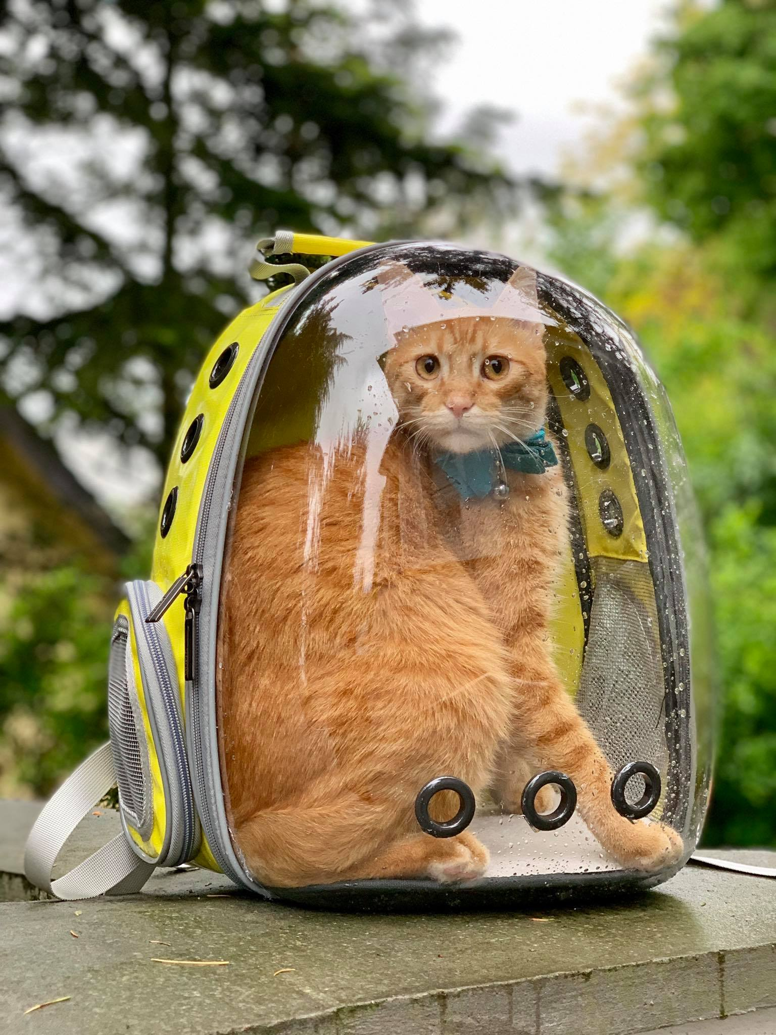 Lollimeow - awesome bag to explore with your cats2.jpg