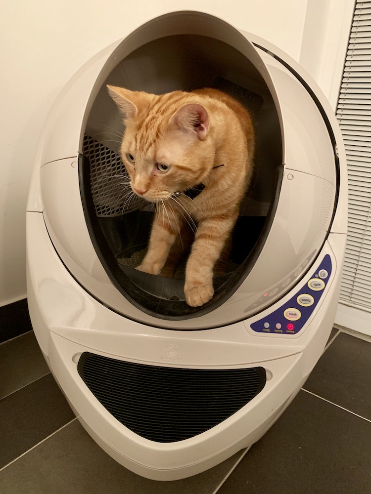 Cat Litter Robot Pets 15.jpg