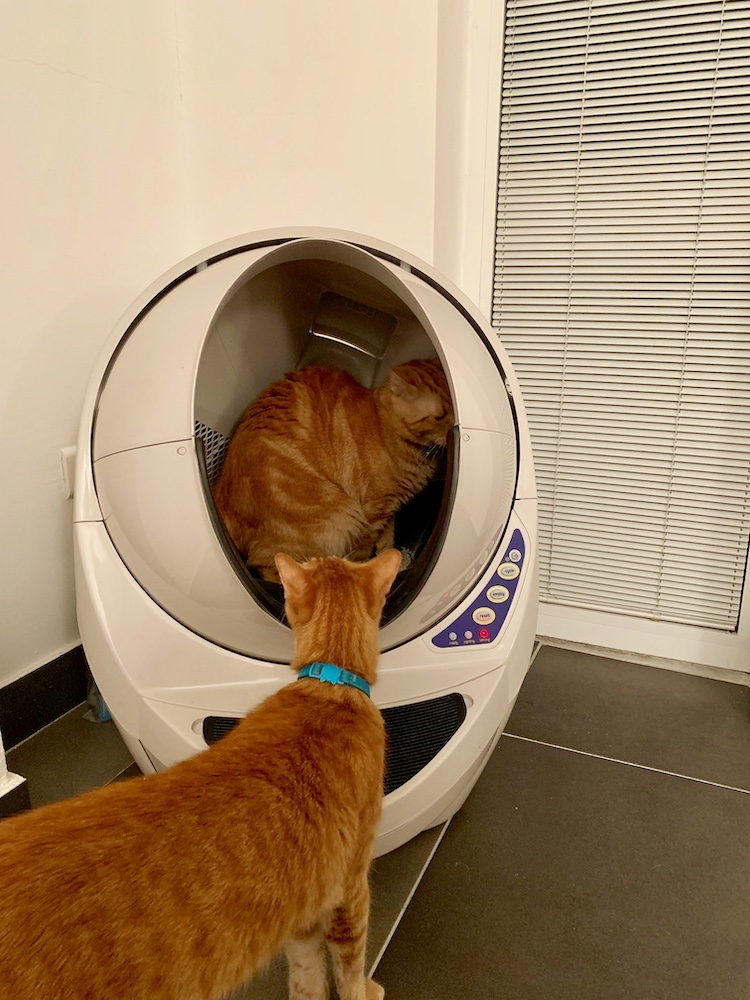 Cat Litter Robot Pets 17.jpg