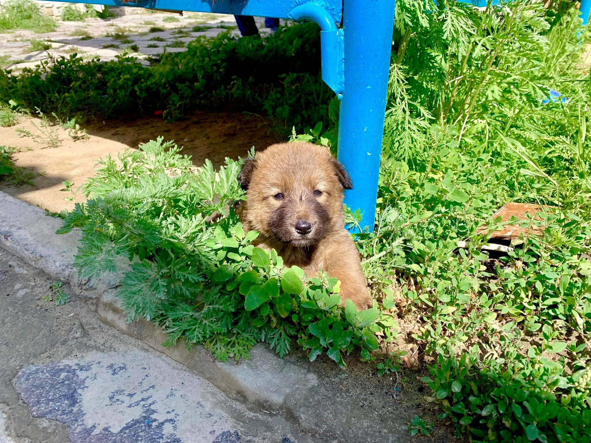 Kach Solo Travels in 2019 Homestay at Bulunkul Village26.jpg