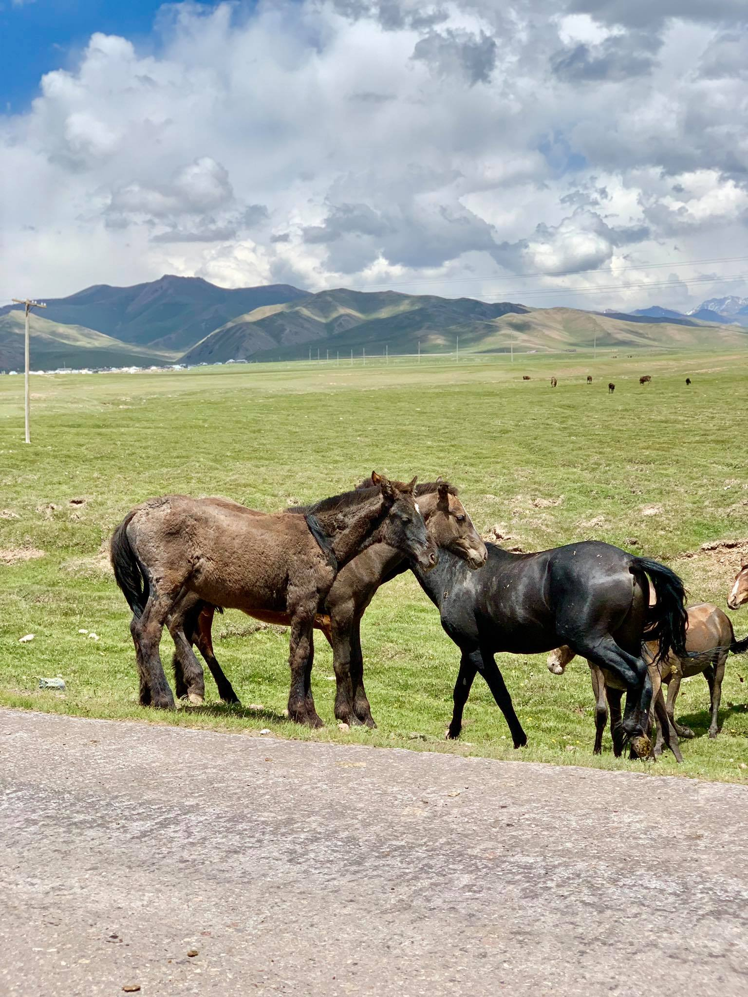 Kach Solo Travels in 2019 Hello from KYRGYZSTAN, my 128th country2.jpg