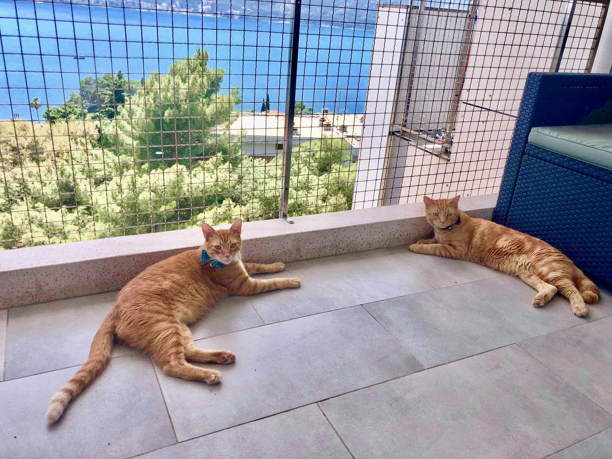 Expat Life in Montenegro Day 27 Captain Ahab & Little Zissou in Montenegro.jpg
