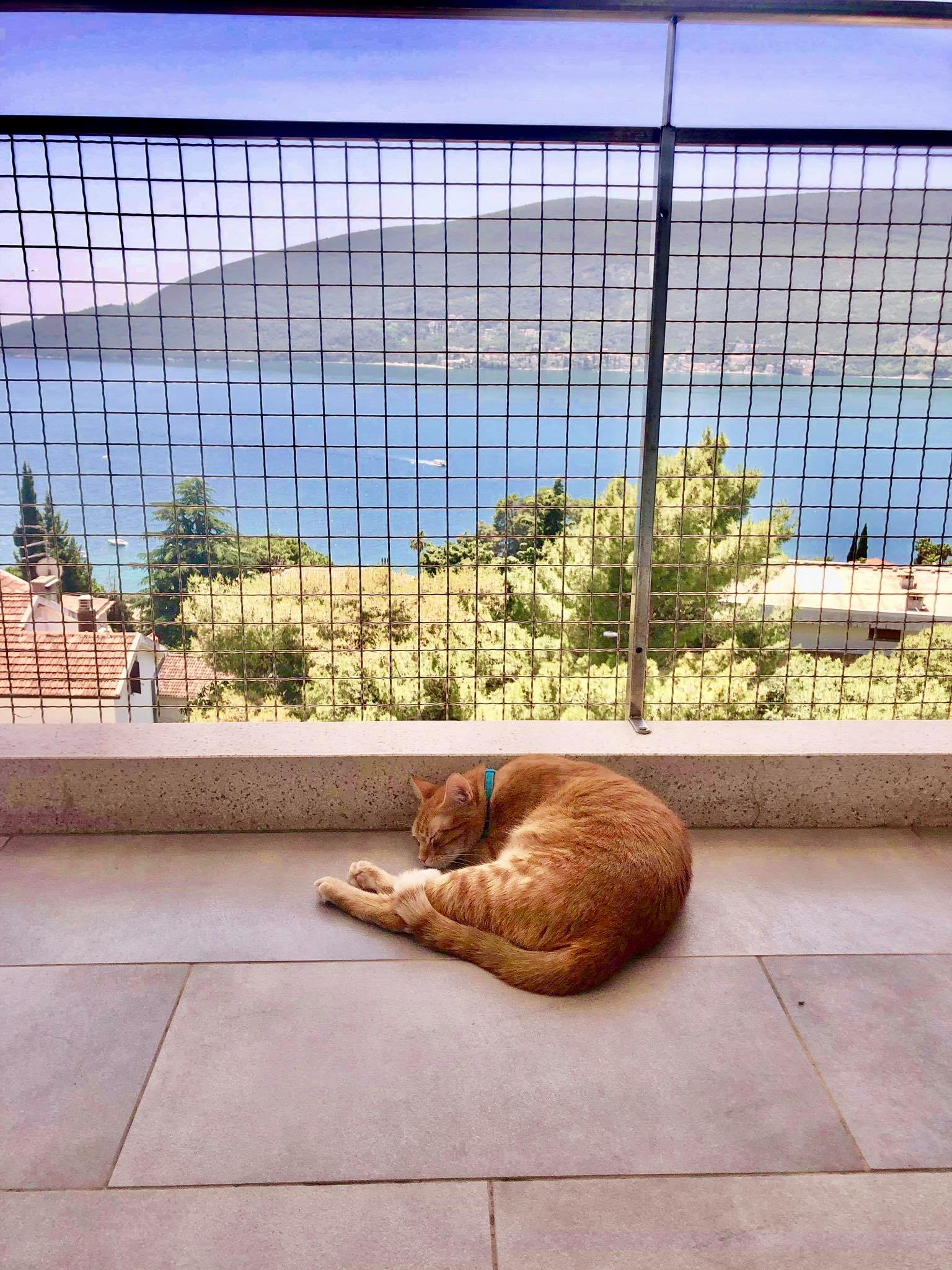 Expat Life in Montenegro Day 27 Captain Ahab & Little Zissou in Montenegro1.jpg