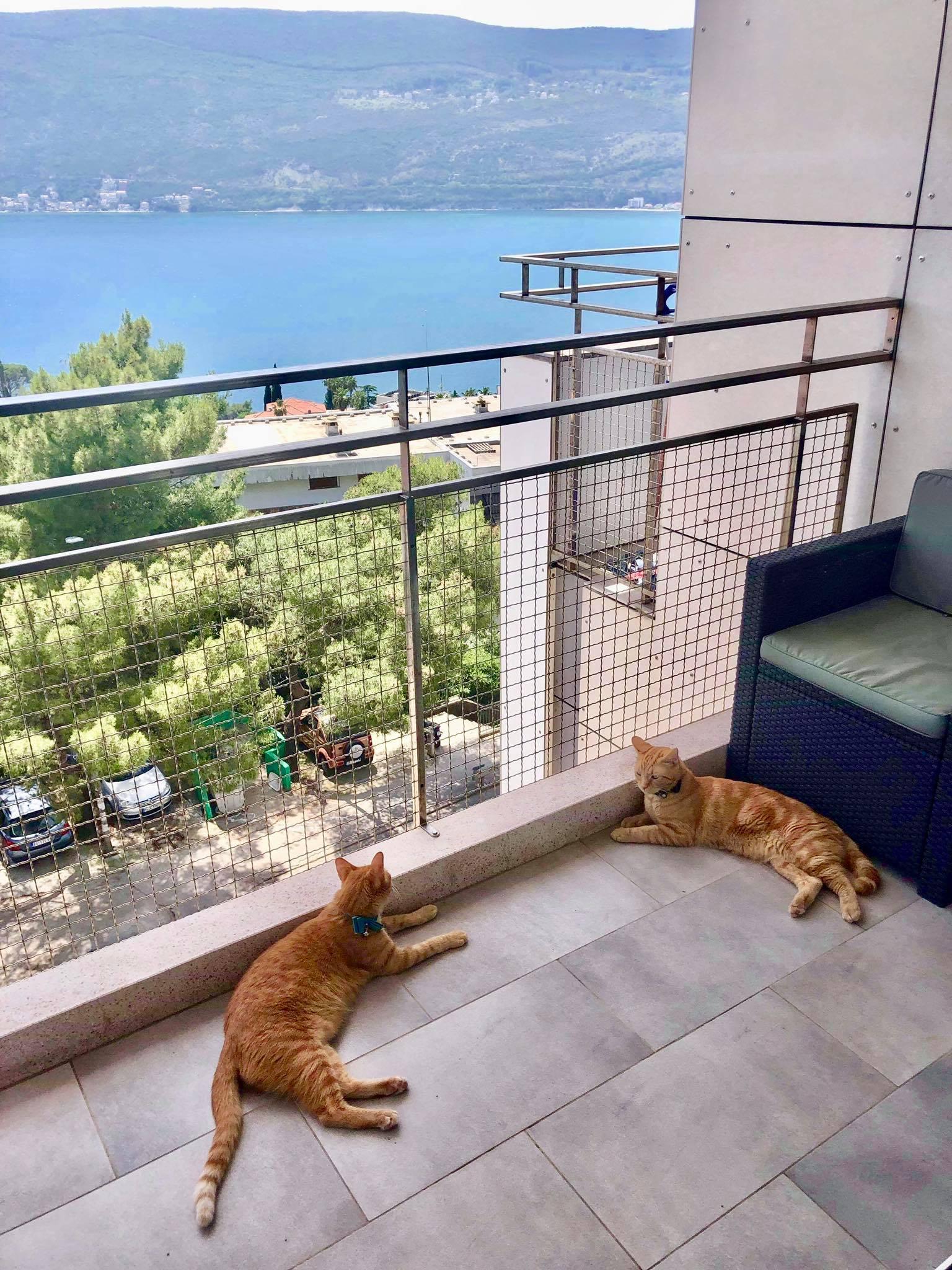 Expat Life in Montenegro Day 27 Captain Ahab & Little Zissou in Montenegro2.jpg