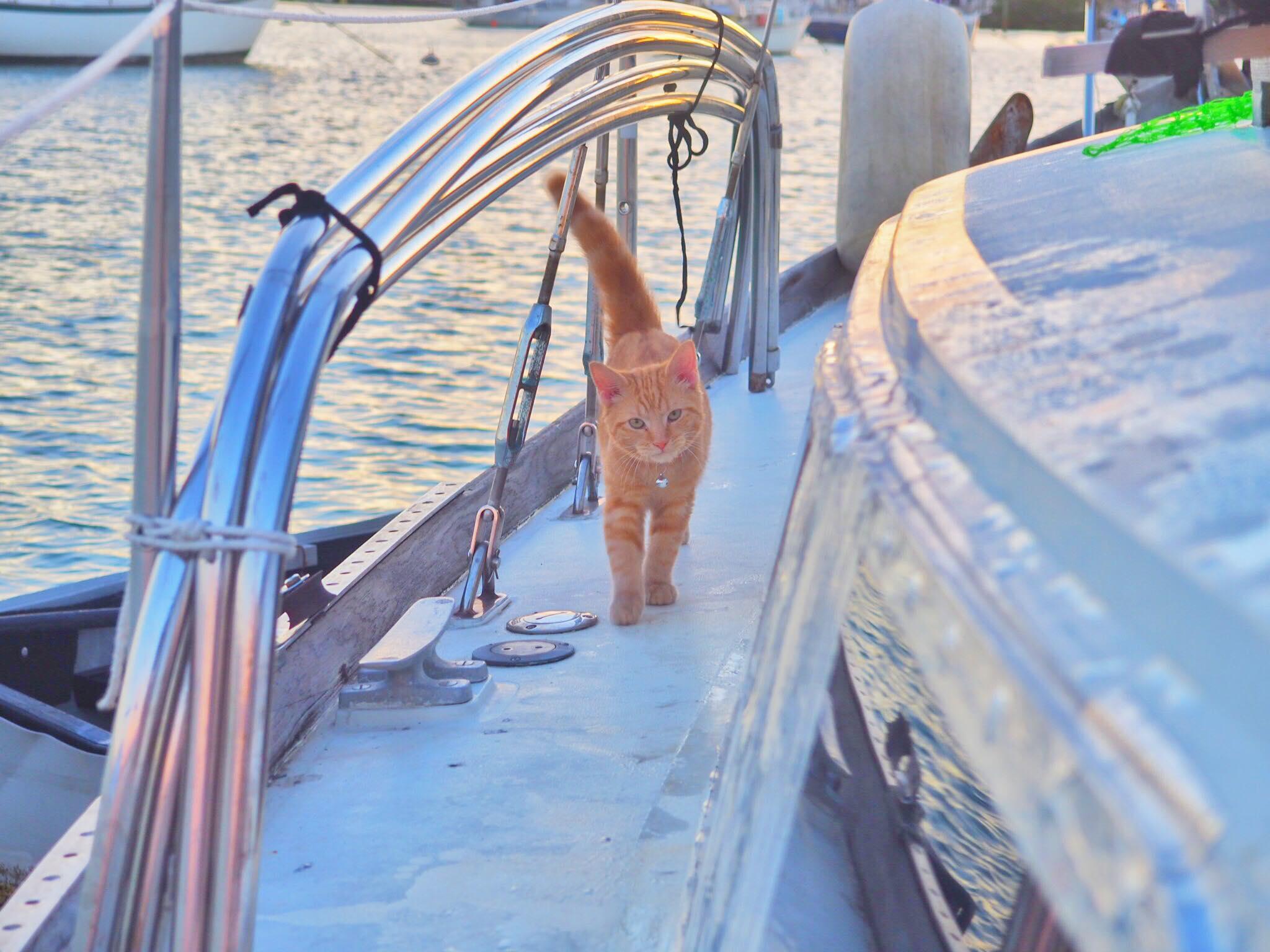 Captain Ahab.jpg
