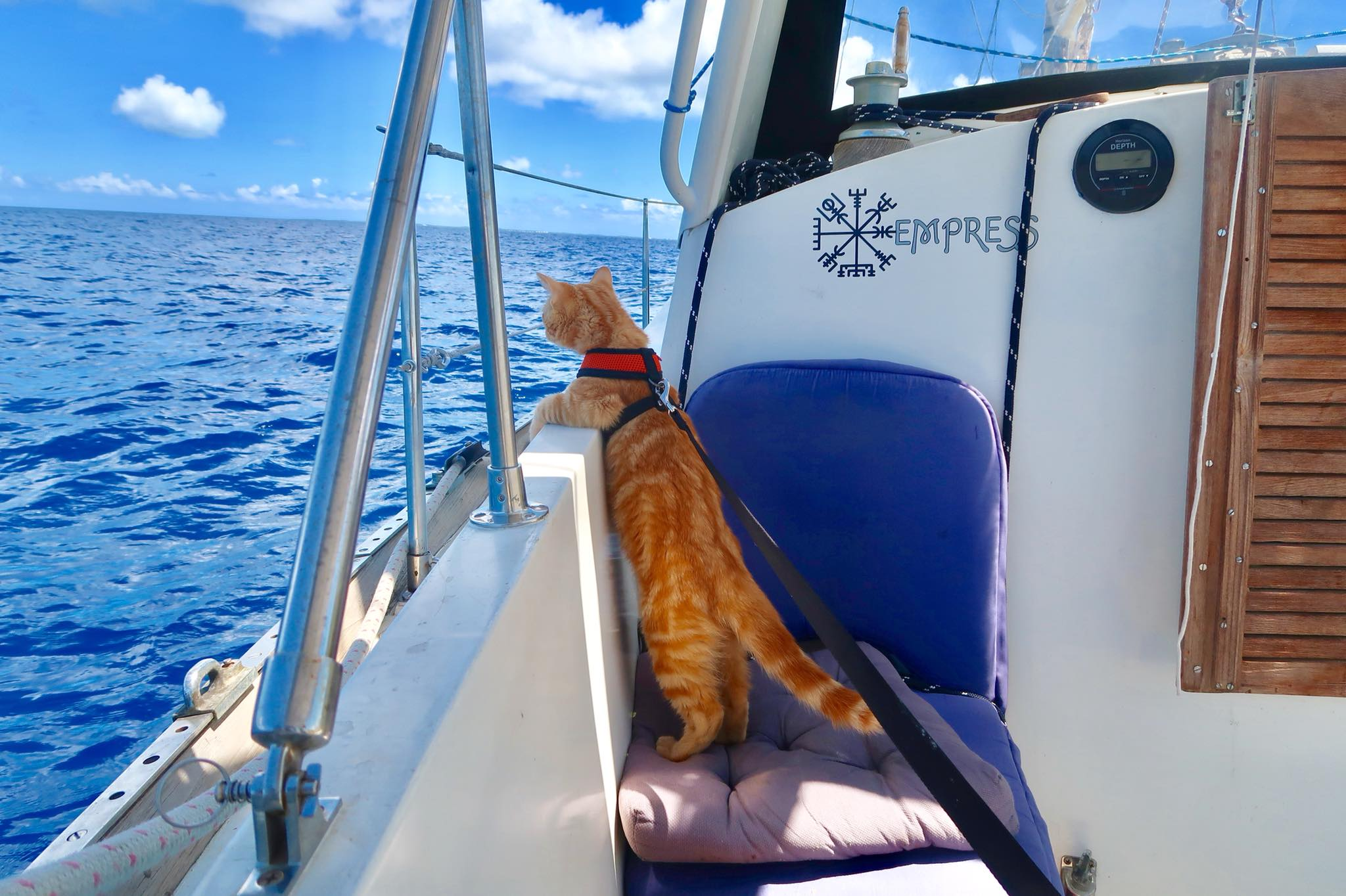 Captain Ahab1.jpg