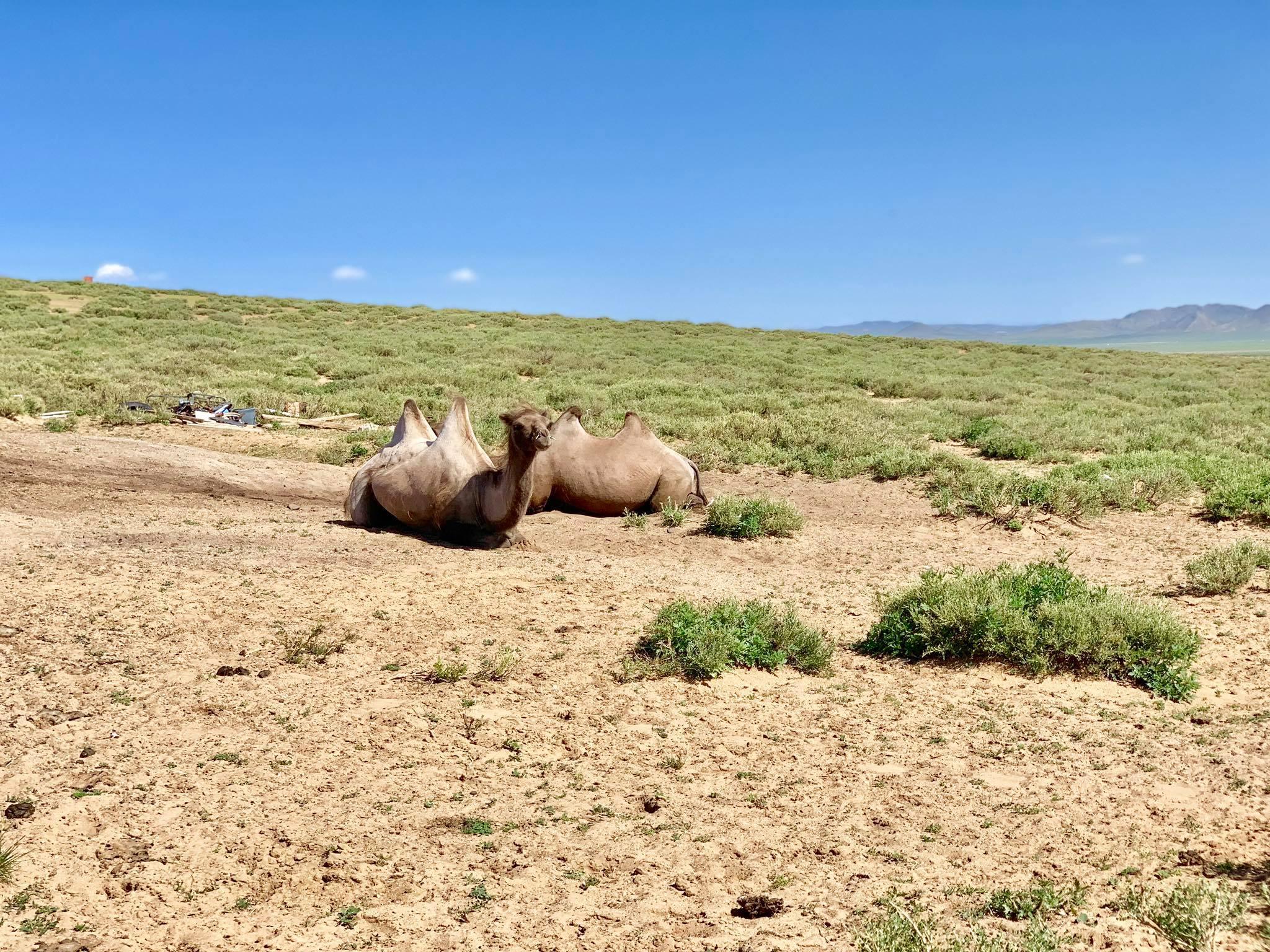 Kach Solo Travels in 2019 Nomadic family in Elsen Tasarkhai14.jpg