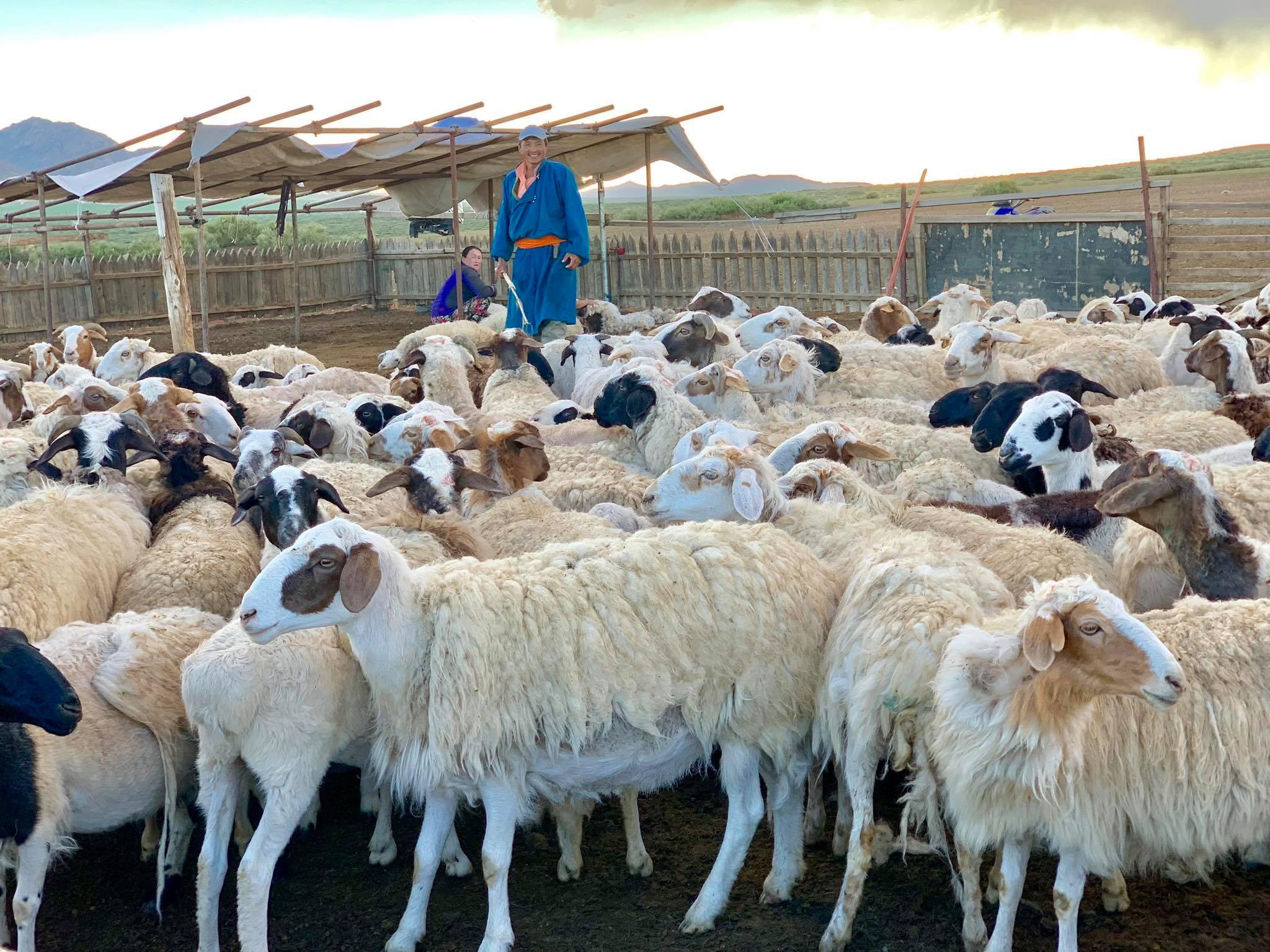 Kach Solo Travels in 2019 Nomadic family in Elsen Tasarkhai21.jpg