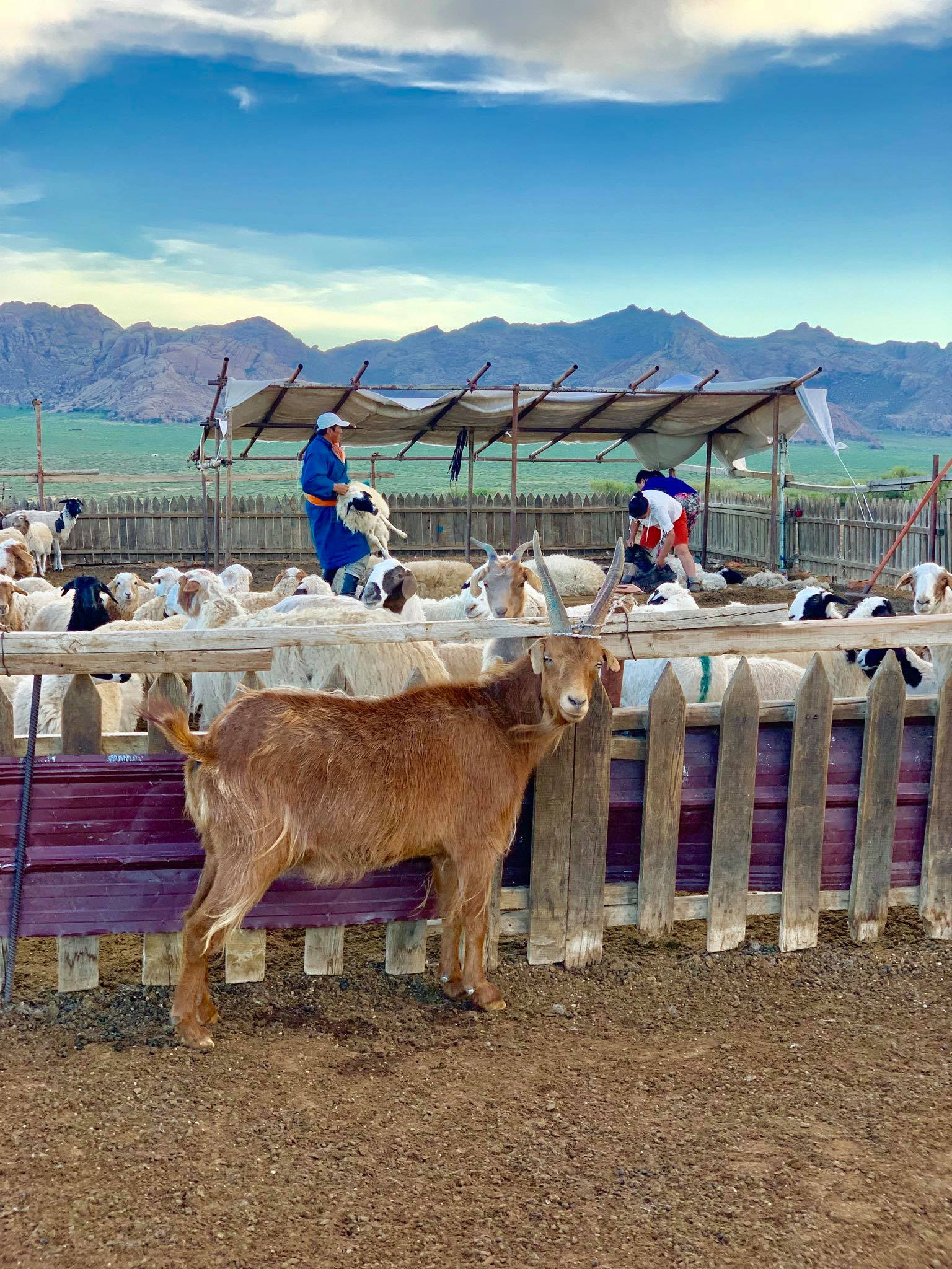 Kach Solo Travels in 2019 Nomadic family in Elsen Tasarkhai24.jpg