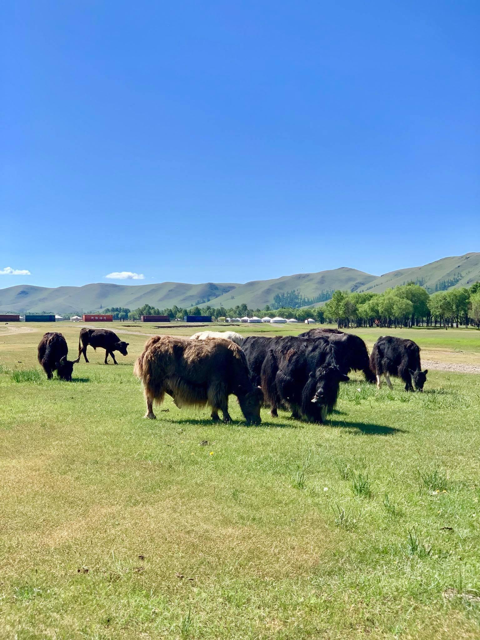 Kach Solo Travels in 2019 Nomadic family in Elsen Tasarkhai29.jpg