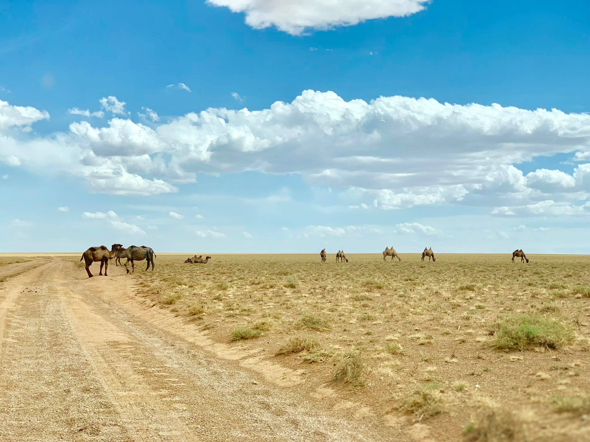 Kach Solo Travels in 2019 One of the hikes during my trip in Gobi desert25.jpg