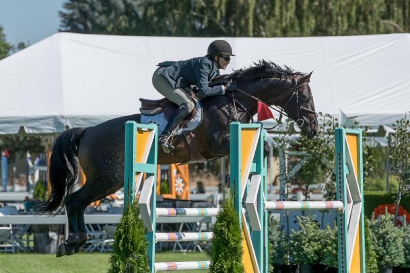 Maplewood's stallion Good To Know with Julie Winkel