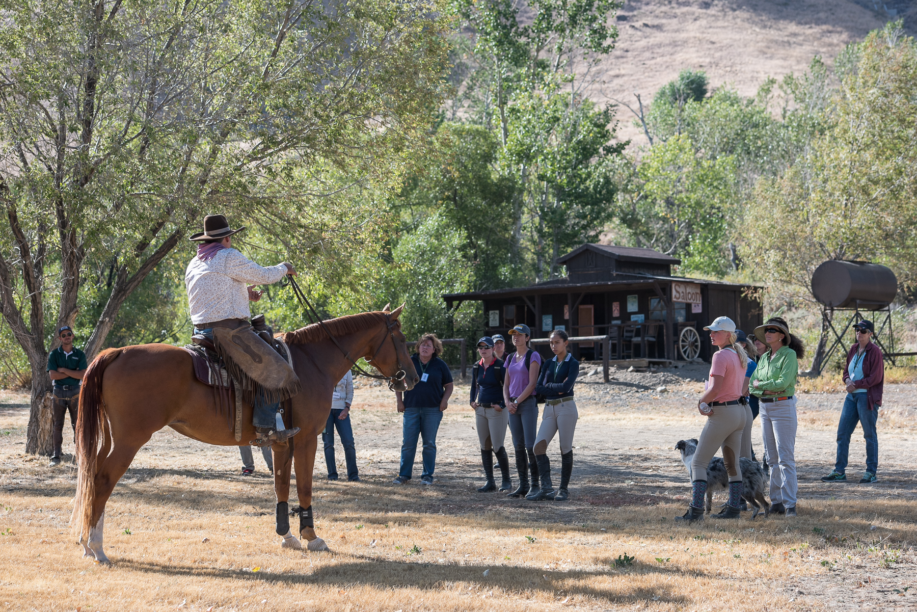 Young Horse Trainer School with Jose Alejos