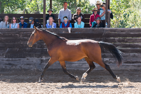 Young Horse Trainer School