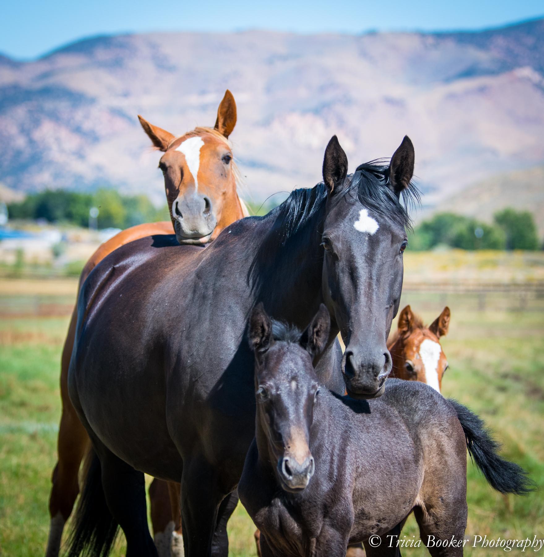 Foals-5170.jpg