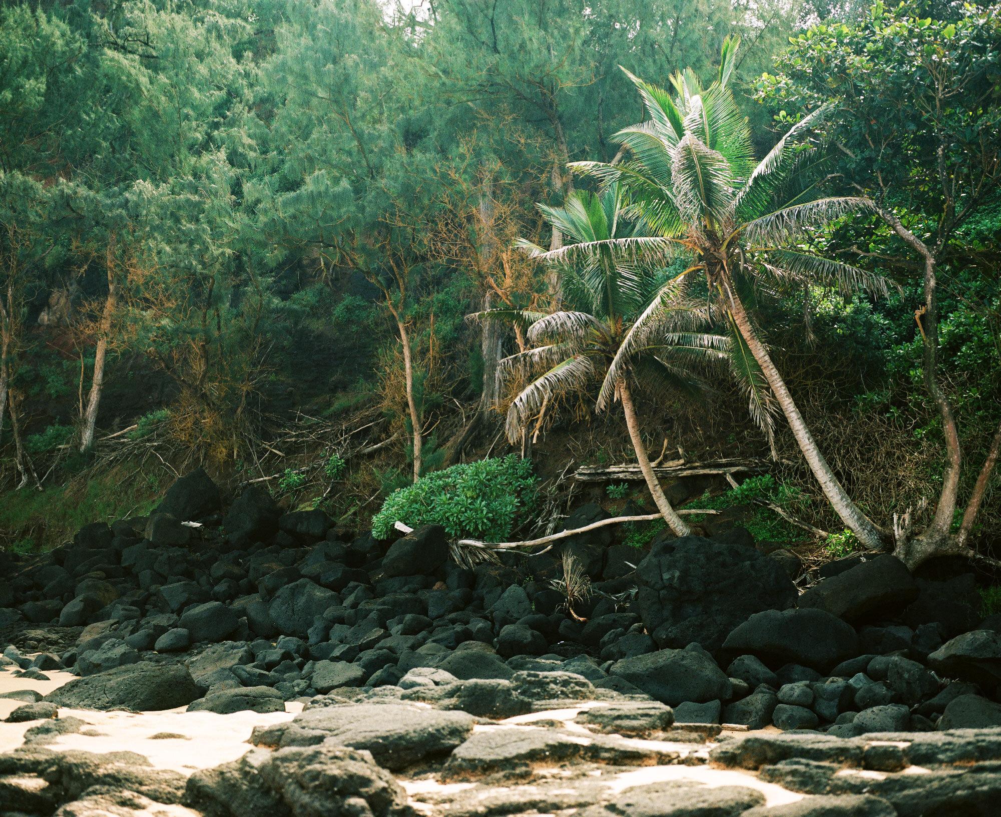 Arianna_Lago_Assortment_Kauaii_1.jpg