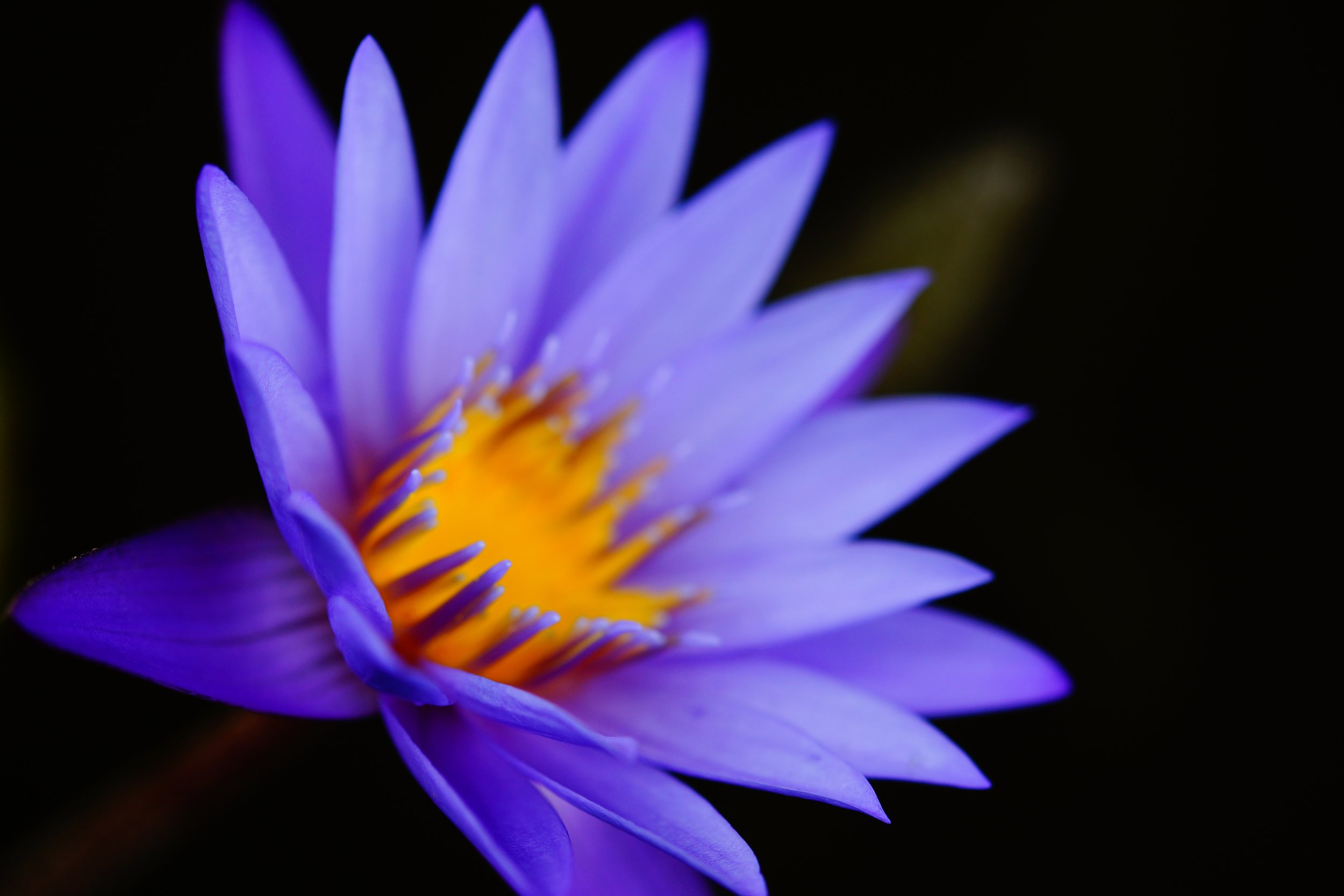 LOP natural flower indigo.jpeg