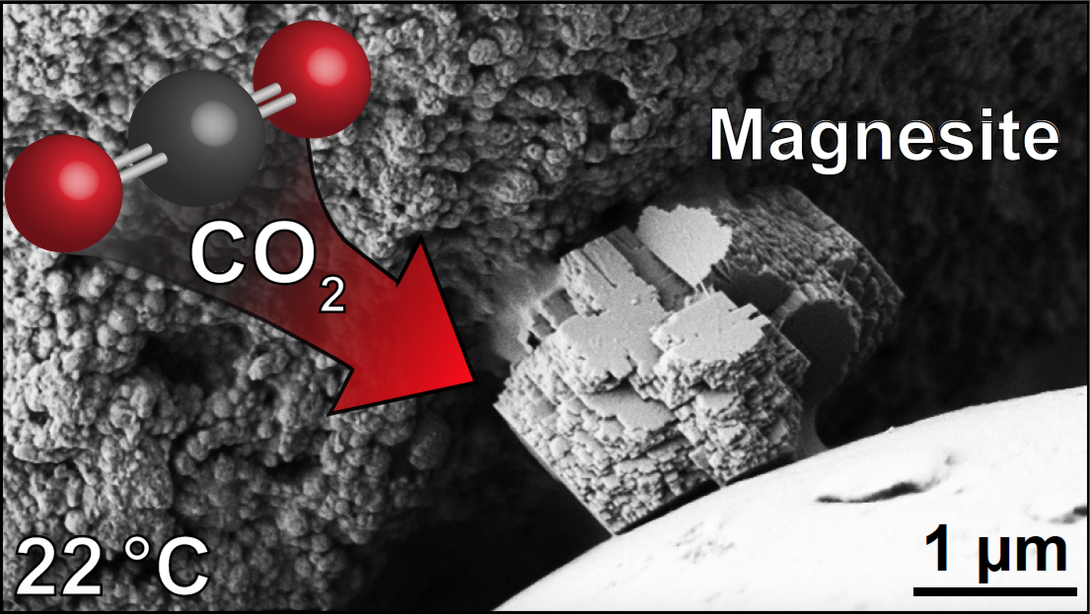Magnesite crystal on carboxylated polystyrene sphere sequestering carbon dioxide.
