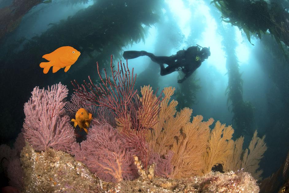OPEN WATER DIVER .... Where your underwater adventure begins
