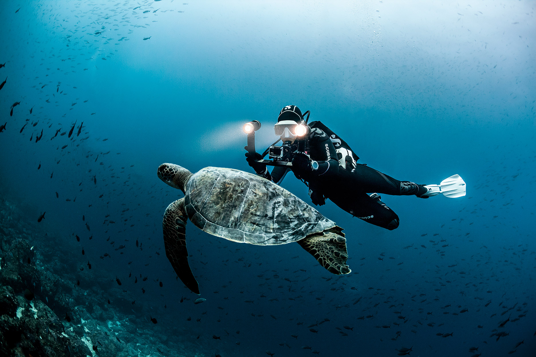 Sealife_whitefins_turtle-LR.jpg