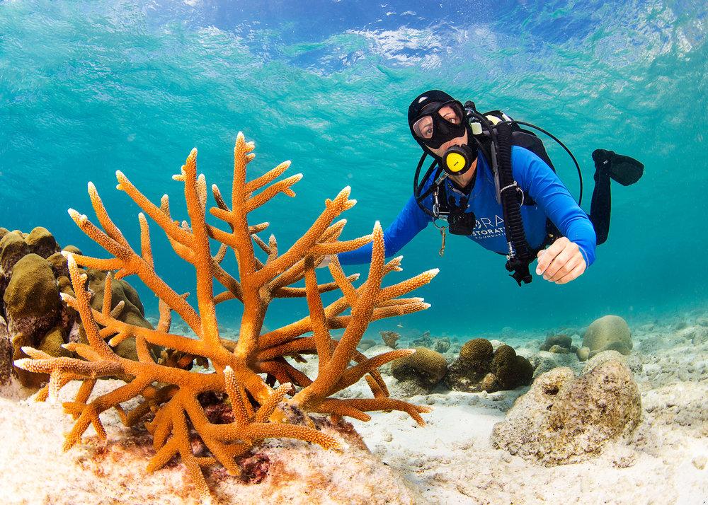Bonaire-Coral-Restoration-Project.jpg