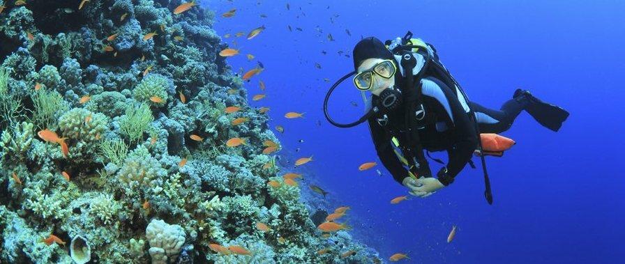scuba-diving-adventures-in-the-monterey-bay-national-marine-sanctuary.jpg
